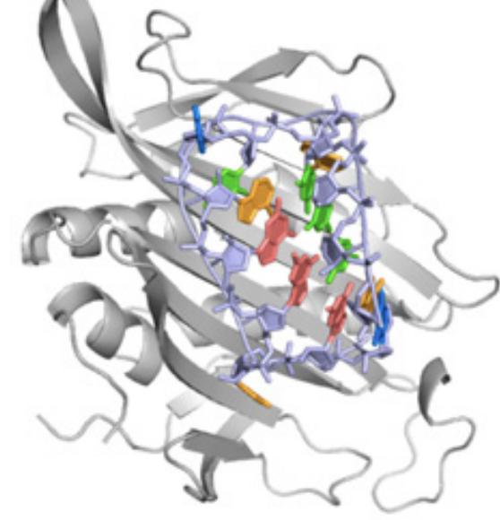 DAS LAB + Stanford Biochemistry Department + Stanford